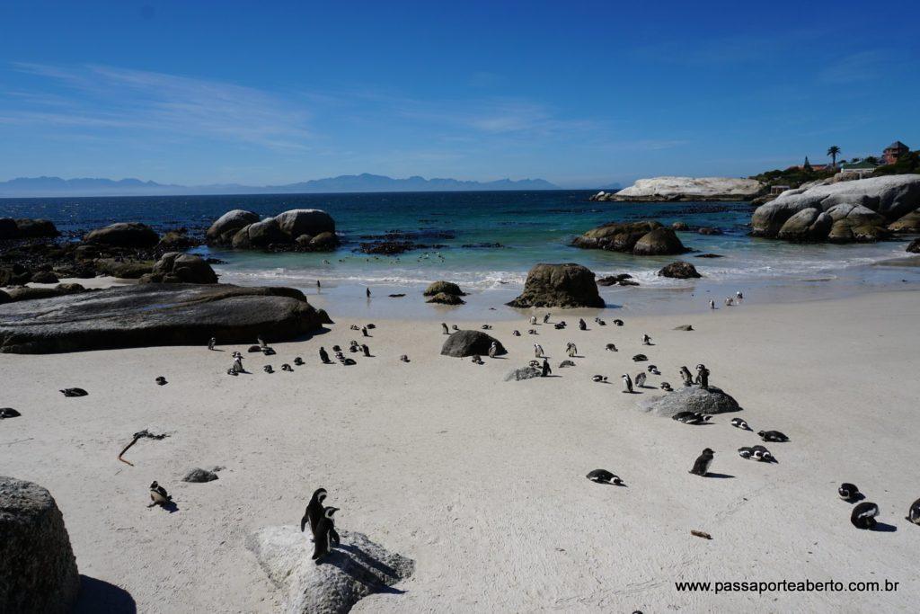 Foxy Beach é a praia onde fica a Boulders Penguin Colony