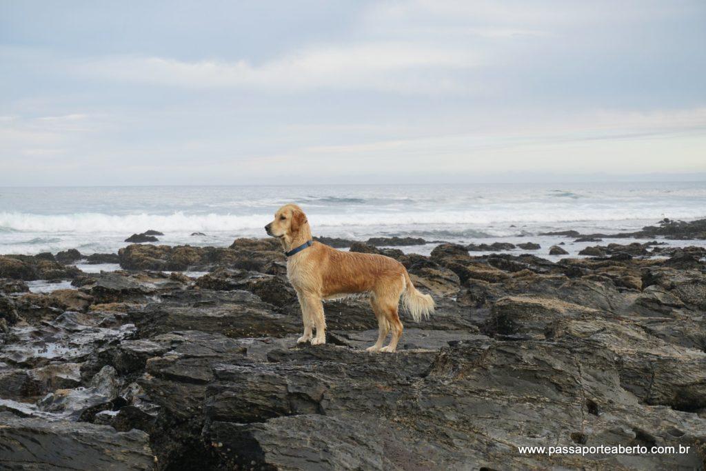 Cão pescador!