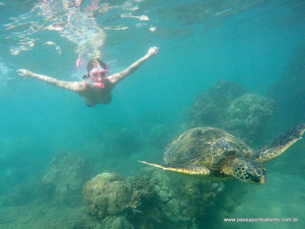 Vendo tartarugas no Hawaii. Só olhar, sem tocar e não levar nada além das lembranças!