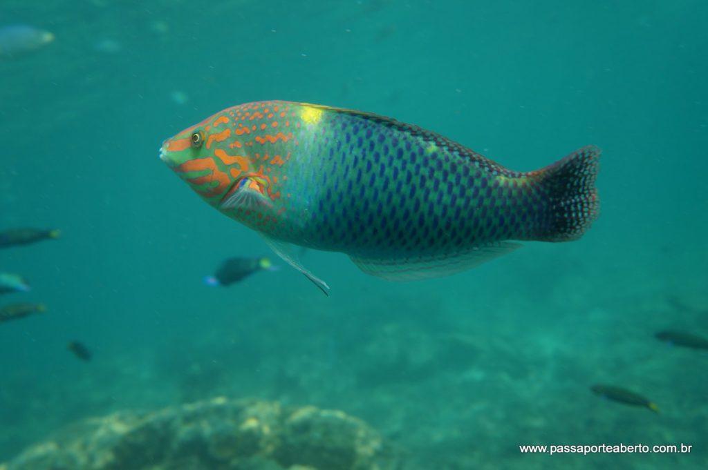 Snorkel de qualidade aqui!