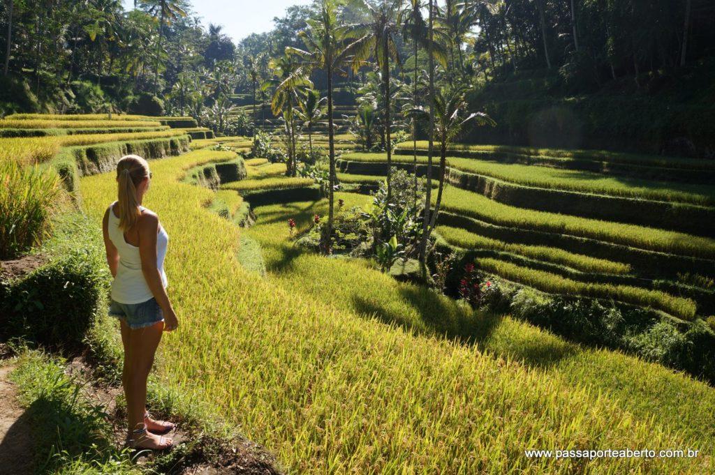Lindíssima paisagem de Tegalalang!