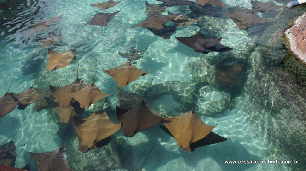 Pelos caminhos do hotel é cheio de animais marinhos!