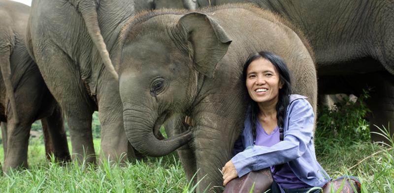 Lek Chailert e seu lindo trabalho com o Elephant Nature Park em Chiang Mai!