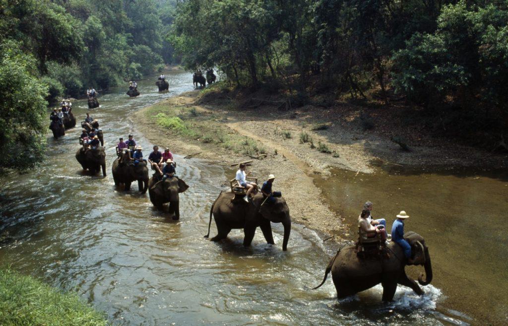 Passeio em cima de elefantes é um dos desejos mais comuns entre os turistas que visitam a Tailândia e o Sudeste Asiático!
