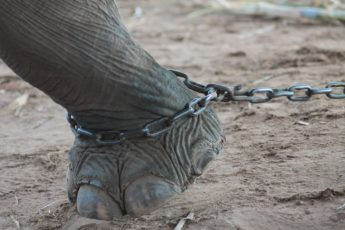 elephant-2718497