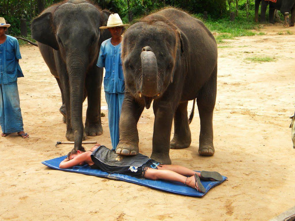 Massagem feita por filhote de elefante? Não! Olhem ali no chão o instrumento para machucar os bichinhos!