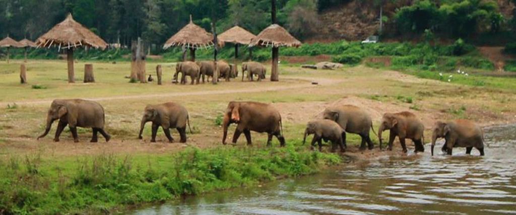 Elephant Nature Park é um santuário de elefantes, bem diferente dos passeios tradicionais que se vê por aí!